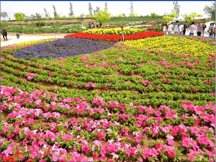 """""""大自然""""组织了集体活动,易县狼牙山油菜花节,牡丹园和满城龙居瀑布"""